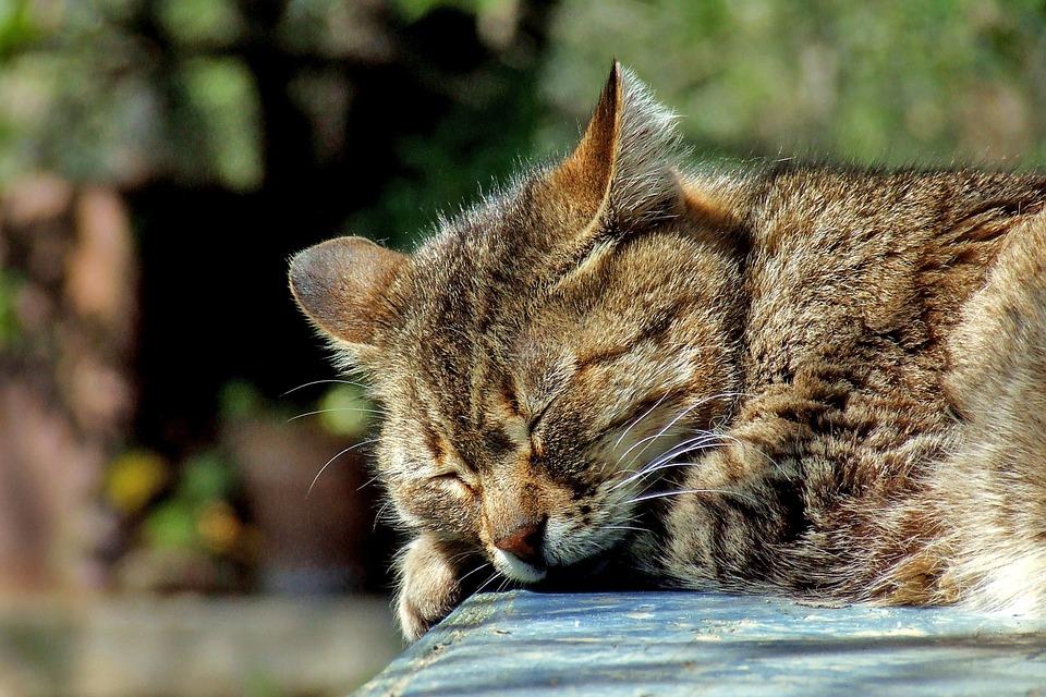Schlafprobleme, Durchschlafen, innere Ruhe, Prog. Muskelentspannung, Siegburg